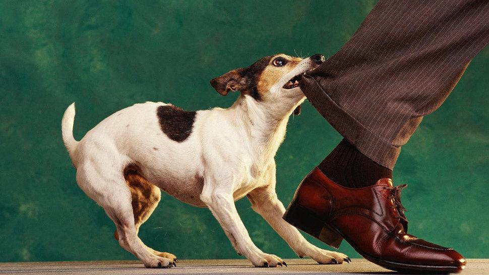 Если укусила собака, что делать?