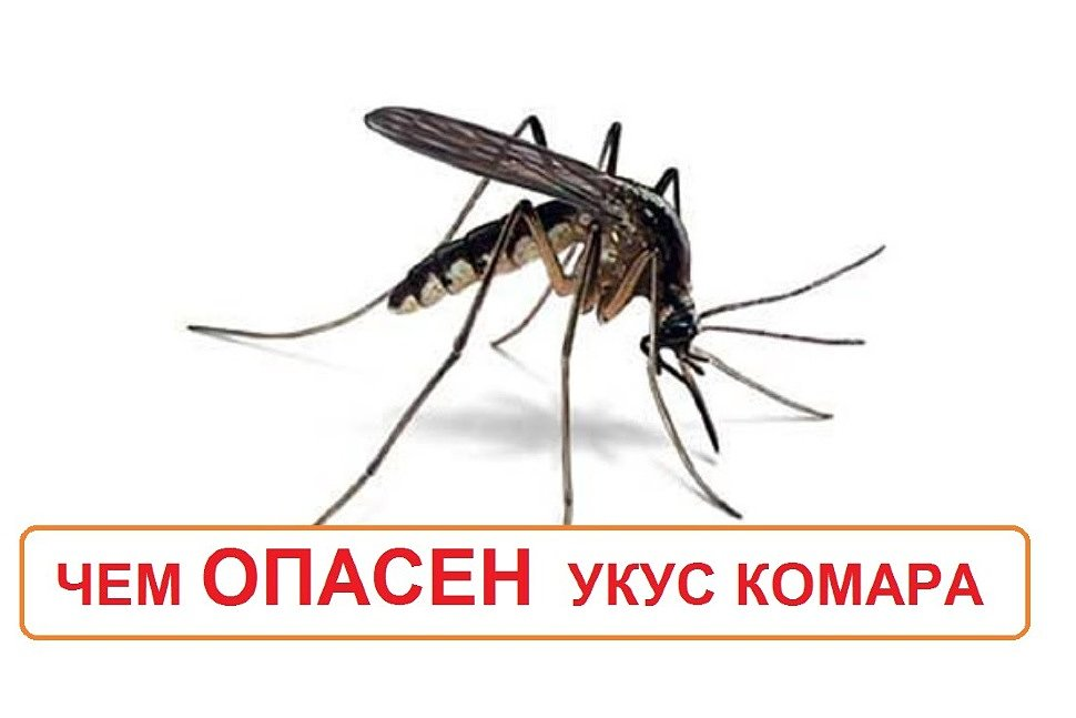 Малярия - болезнь от комаров