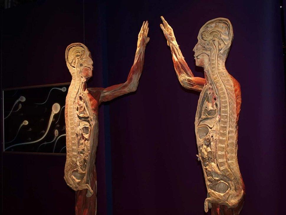 костная ткань человека