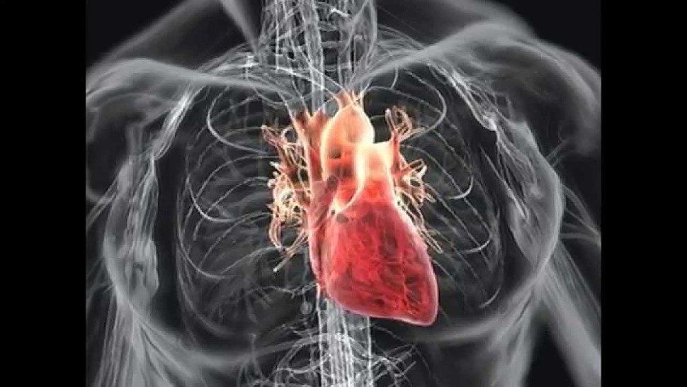 Причина возникновения порока сердца?